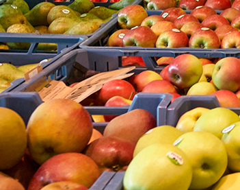 fruithuis_fruit